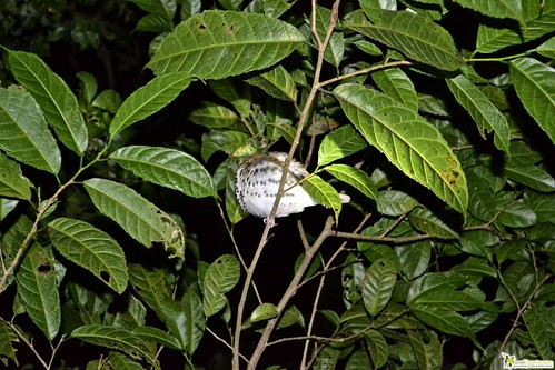 bird sleeping in monteverde night tour costa rica