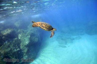 Best-snorkel-Waimea