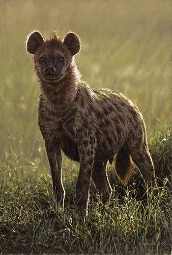 'Hyena' oil on board