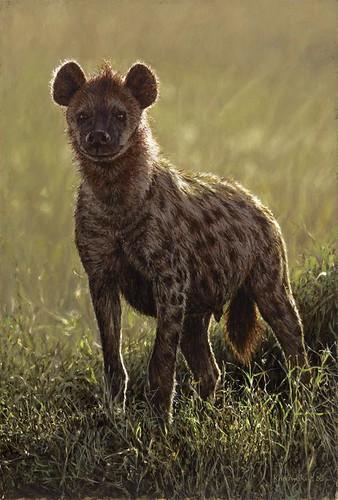 'Hyena' oil on board
