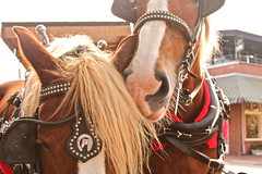 rodeo(0.0), western riding(0.0), cowboy(0.0), rein(1.0), halter(1.0), bridle(1.0), pack animal(1.0), horse tack(1.0), horse harness(1.0),
