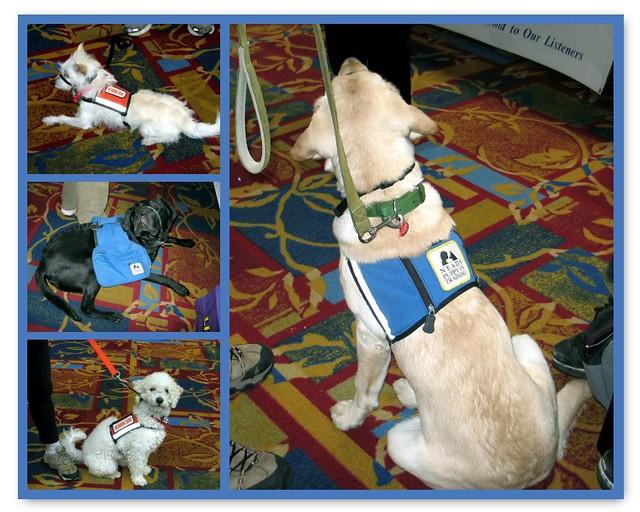 Training Vests Dogs