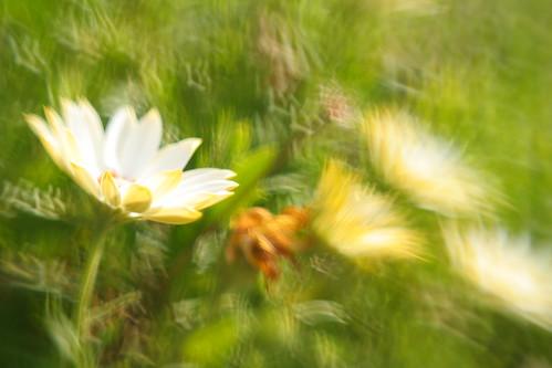 california winter white flower green walnutcreek johnmorgan plasticoptic lensbabv gullaperture