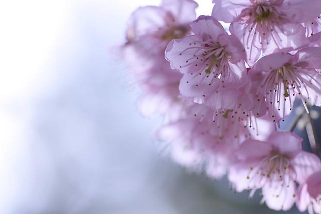 Sakura 2012-10