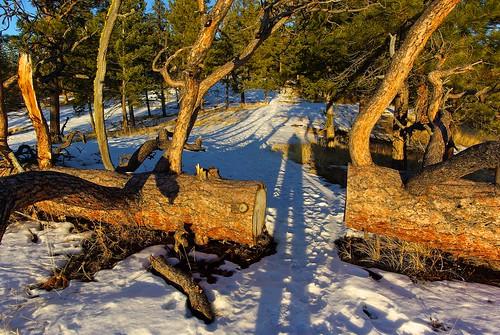 winter sunset snow canada tree ice rocks pentax ellis snowy britishcolumbia okanagan canyon pines icy bigfoot penticton sasquatch ponderosapine k10d elliscanyon smcpentaxda15mmf4edallimited nigeldawson jasbond007 copyrightnigeldawson2012