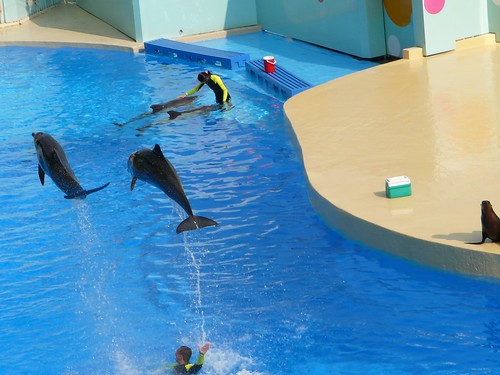 Dolphins at Ocean Theatre