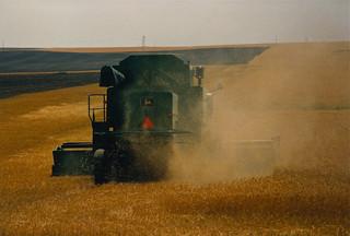 Combine harvester, eastern Montana