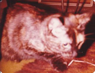 Suzy, Feb 1981