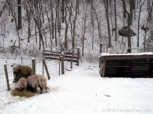 Snowy day at the sheep barn 5 - FarmgirlFare.com