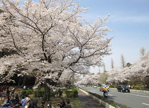 国立駅前大学通りの花見 2012年4月10日 by Poran111