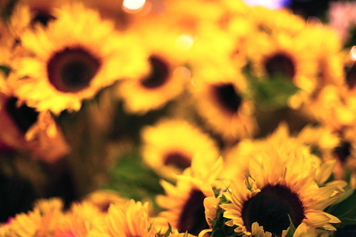 Sunflowers [46/365]