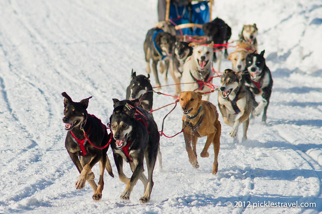 Dog Sledding Races
