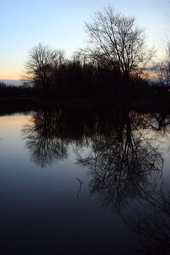 sunset reflection tree water field newjersey pond branches lumberton rudderow