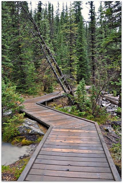 Wooden Walkway Flickr Photo Sharing
