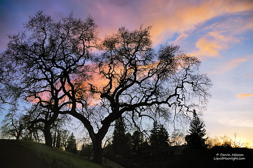 california ranch park trees sunset tree fountain grass reflections spring twilight pond oak rocks long exposure glow dusk walk hills explore moonlit danville pines moonlight diablo walnutcreek alamo twisted regional contracosta darvin explored atkeson darv liquidmoonlightcom