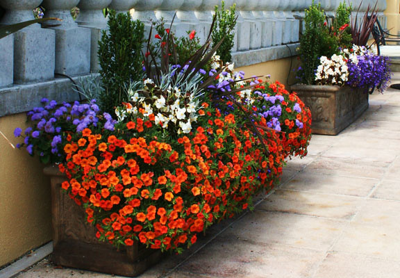 Containers overflowing with annuals add summer color to terraces.