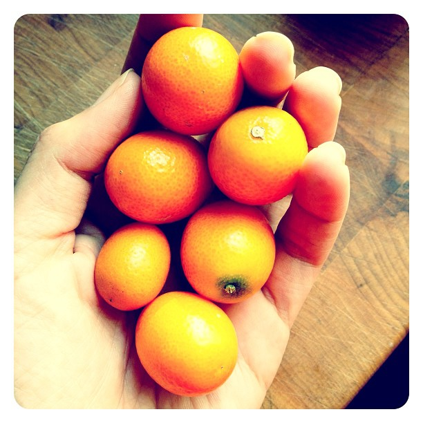 I heart kumquats #marchphotoaday #fruit