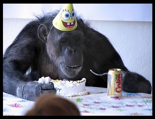 Images Of Monkey Eating Cake
