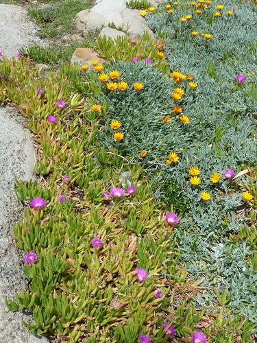 fiori e rocce