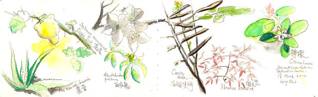 Sketching Plants at a Nearby Arboretum 獅子會自然教育中心畫植物