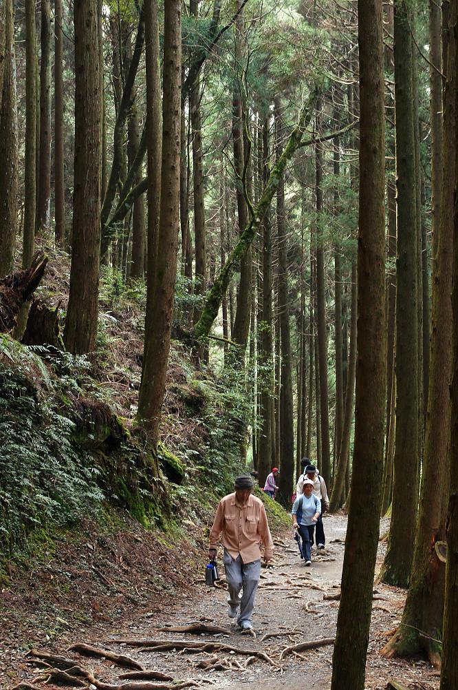 觀霧巨木步道-037