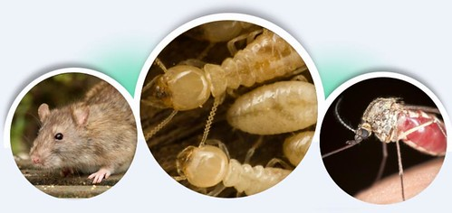 Pest Control Utah
