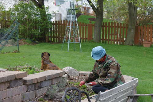 (Cold) Spring Scene, with Gardener and Watchful Dog