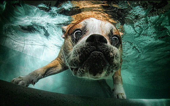 Water Sharks... err... Dogs! 7129253329_e0cac4f9e8_z