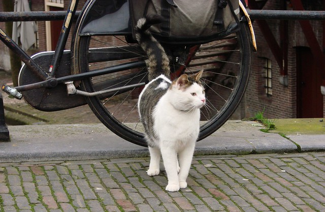 Oudegracht Bloemen Kat