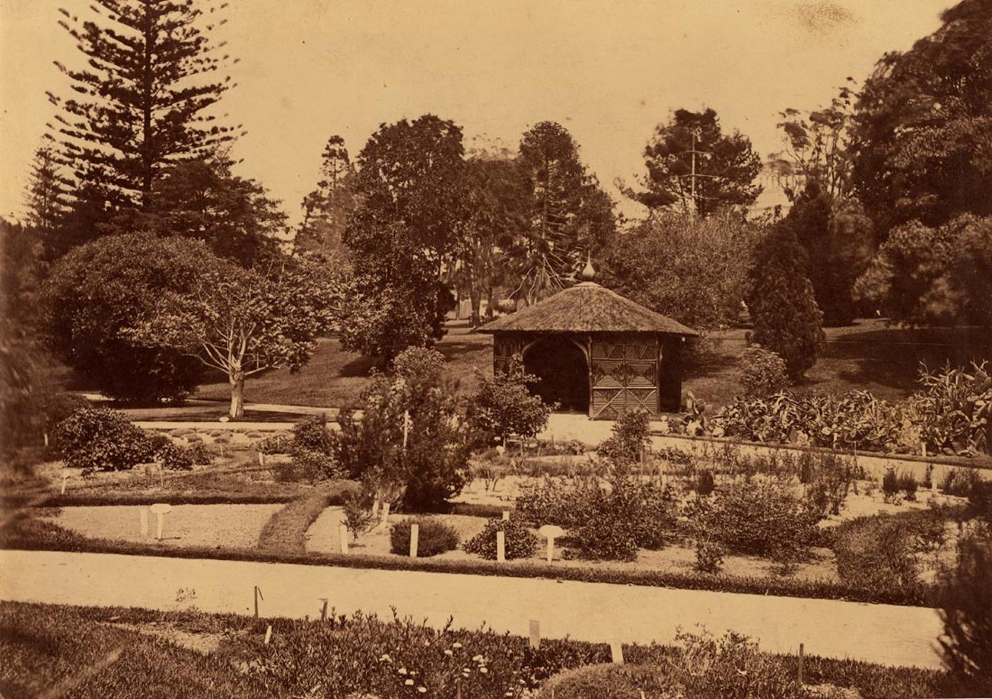 [Sydney Botanic Gardens, ca. 1879-1882]