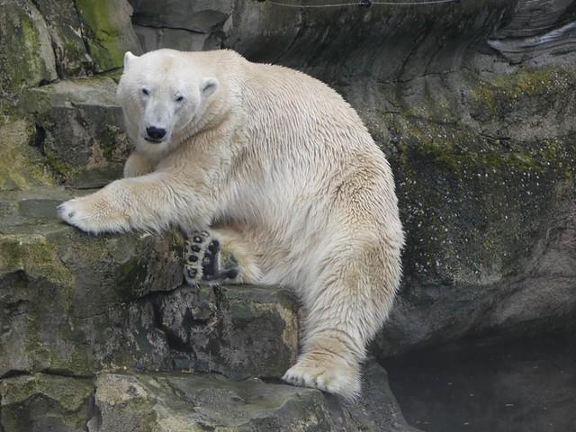 Lloyd, Zoo am Meer