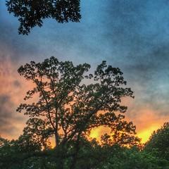 Western Sky, Arlington Virginia 8:38 p.m. 6/6/16