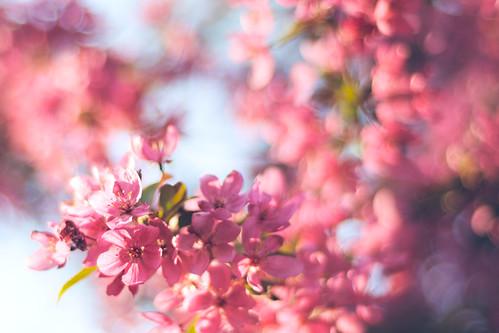 Pink swirl.