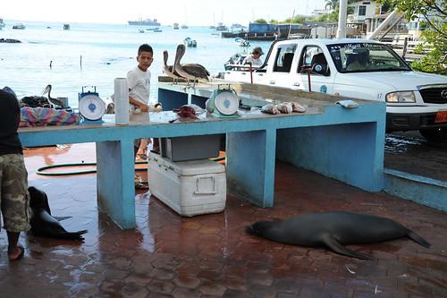 Puerto Ayoraの魚市場