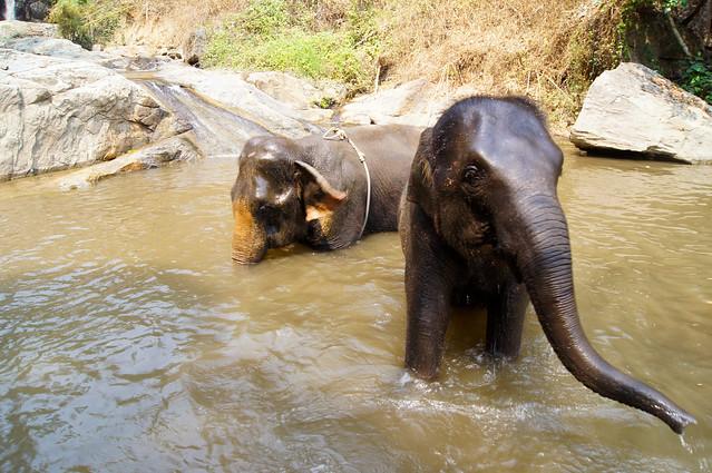 Patara Elephant Sanctuary, Chiang Mai 2012
