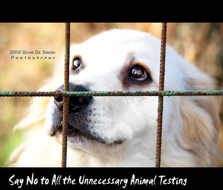 Say No to All the Unnecessary Animal Testing