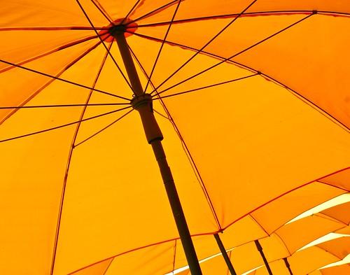 Sunny Day ...