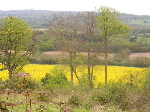 Rapefield in the valley