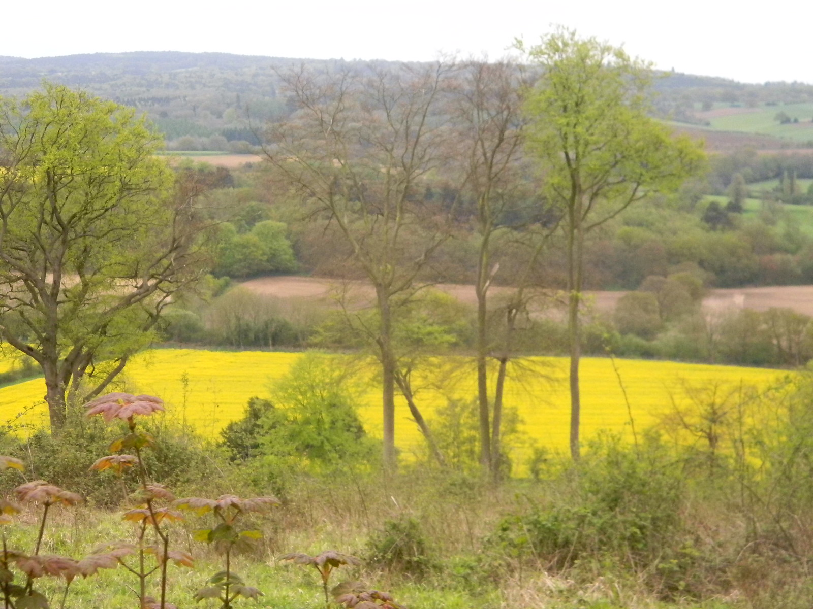 Rapefield in the valley Guildford to Westhumble
