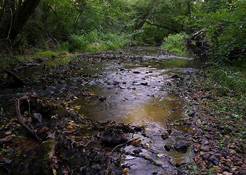 water georgia outdoors brook creeks