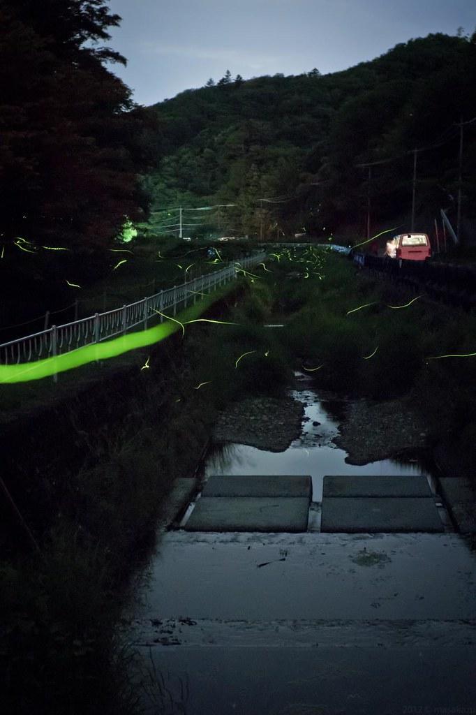 firefly in Minobu