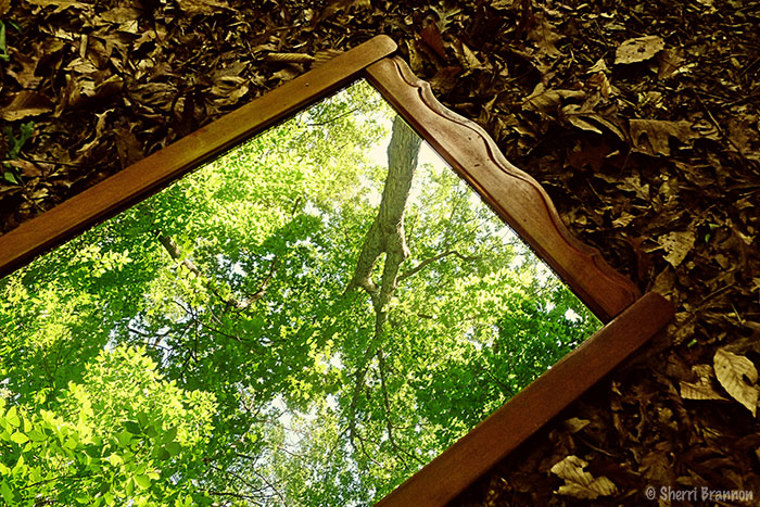 mirror, mirror in the woods