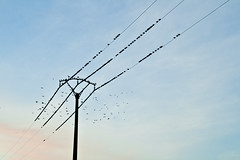 Tendal de paxaros
