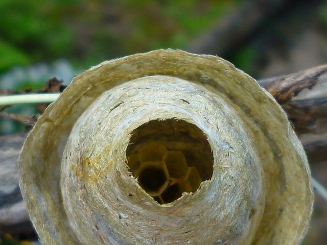 hornet's nest?