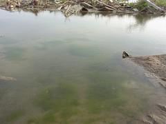 南浜町の水たまり。