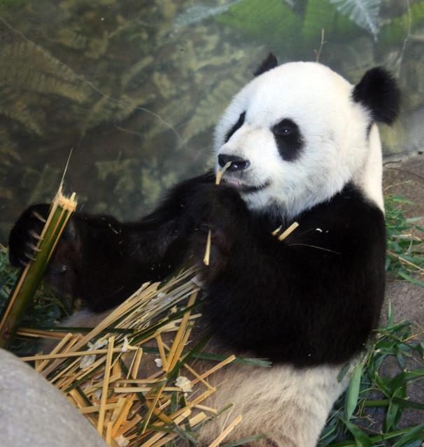 Memphis Zoo 059