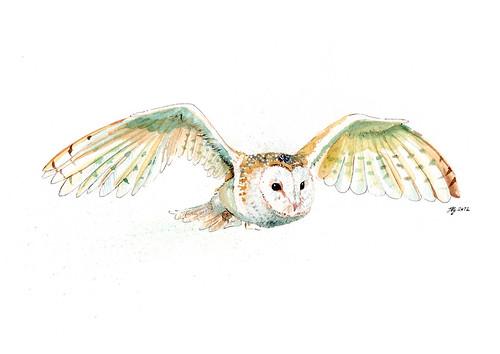 Gliding by jina11