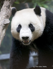 Yun Zi says Happy Thursday!