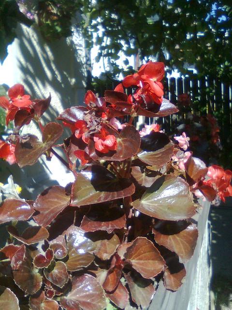Ce plante putem creste in balcon ? - Pagina 3 7394306306_40f0e2a790_z