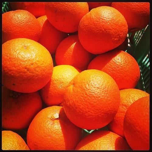 橙酢作るの手伝う